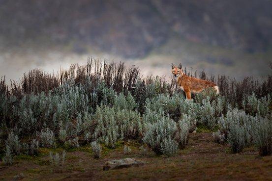 فینالیست های مسابقه عکاسی حیات وحش ۲۰۱۹ سونی اعلام شدند