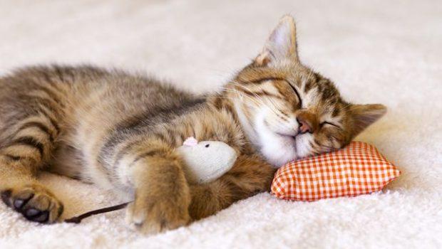 خوابیدن حیوانات