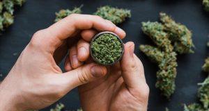 خواص دارویی ماریجوانا