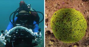 عکاسی زیر آب با الگوریتم جدید دانشمندان دگرگون میشود! + عکس