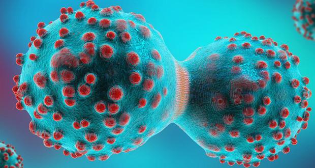 سلول تی ، قاتل تومورهای سرطانی