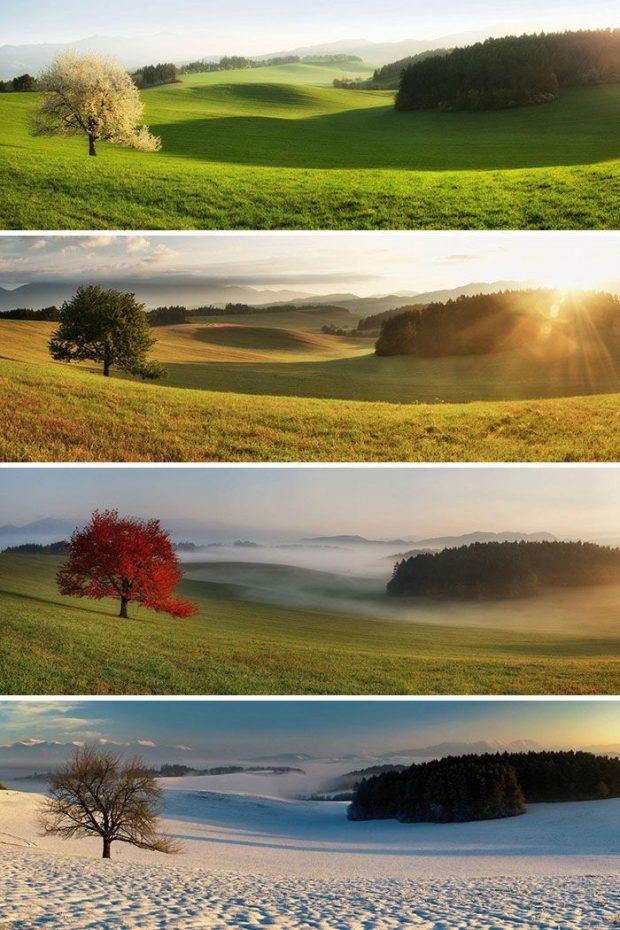45 تصویر شگفت انگیز از مقایسه پدیدههای مختلف اطراف ما!