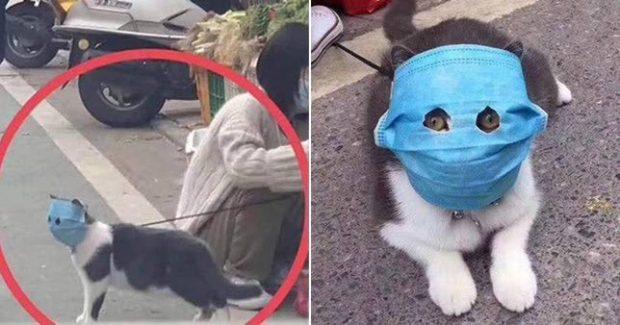 ابتلای گربه ها به کرونا