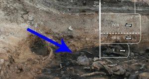 اکتشاف دانشمندان در مورد مرگ عجیب حیوانات عظیم باستانی