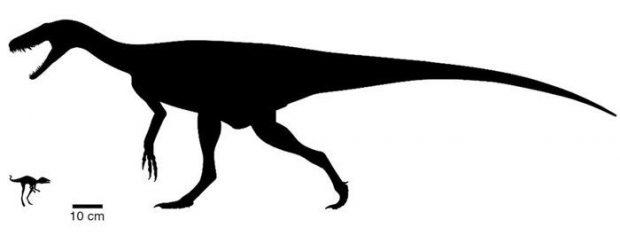 کشف بقایای یک دایناسور مینیاتوری دانشمندان را شگفتزده کرد