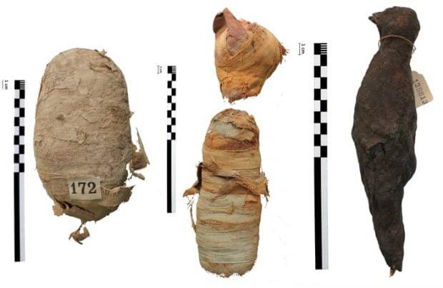 حیوانات مومیایی شده مصر باستان چه شکلی بودند؟