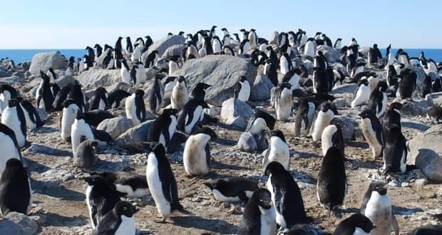 کشف پنگوئن های مومیایی شده 5 هزار ساله در قطب جنوب