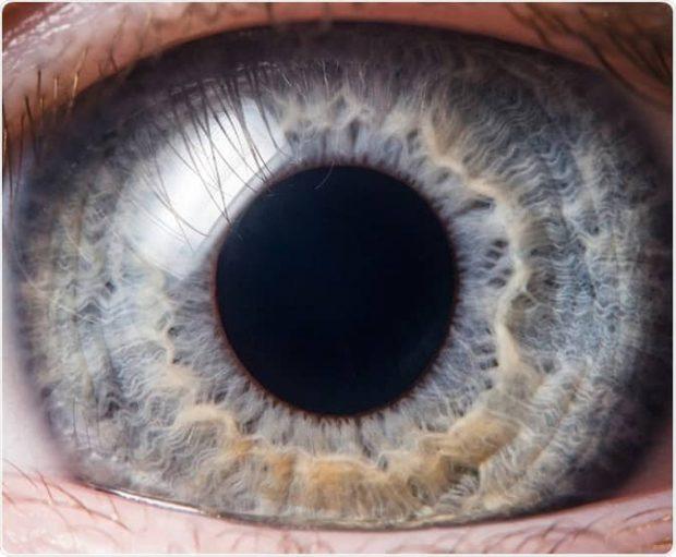 یک بافت خاص چشم انسان میتواند در مقابل ویروس کرونا مقاومت کند