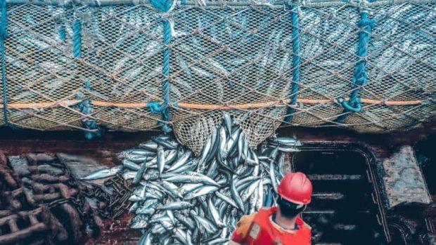 غذاهای دریایی در دنیای پس از وقوع جنگ اتمی ما را سیر نگه میدارند