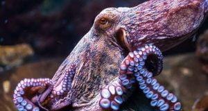 فرآیند تکامل اختاپوس با تمامی موجودات ساکن زمین فرق دارد