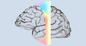 اتصال مغز میمون ها به رایانه , نورالینک