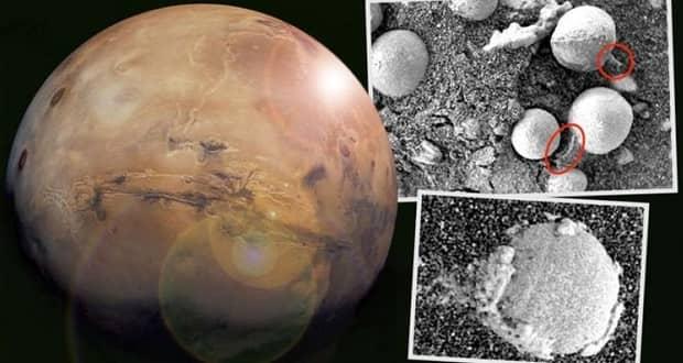 قارچ در مریخ