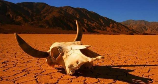 ششمین انقراض دسته جمعی زمین با سرعتی وحشتناک در حال وقوع است