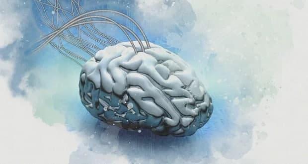 کپی پیست کردن مغز